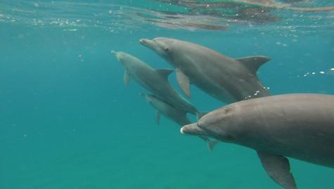 Dolphin Visit