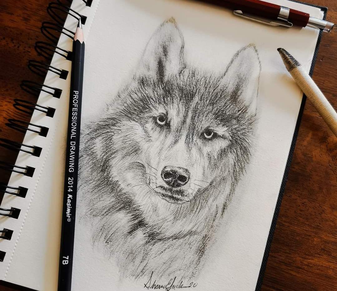 """""""Wolf Sketch"""""""