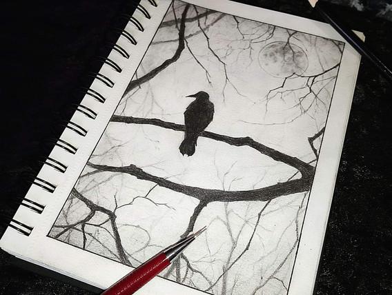 """Bird Sketch"""