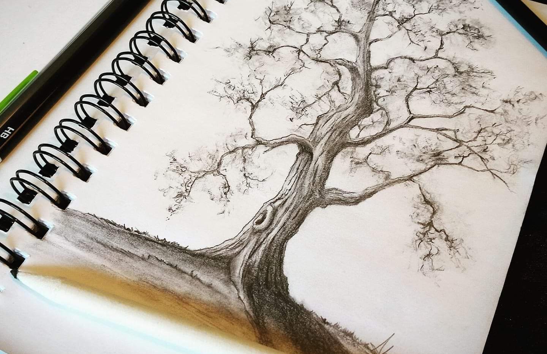 """Tree Sketch"""