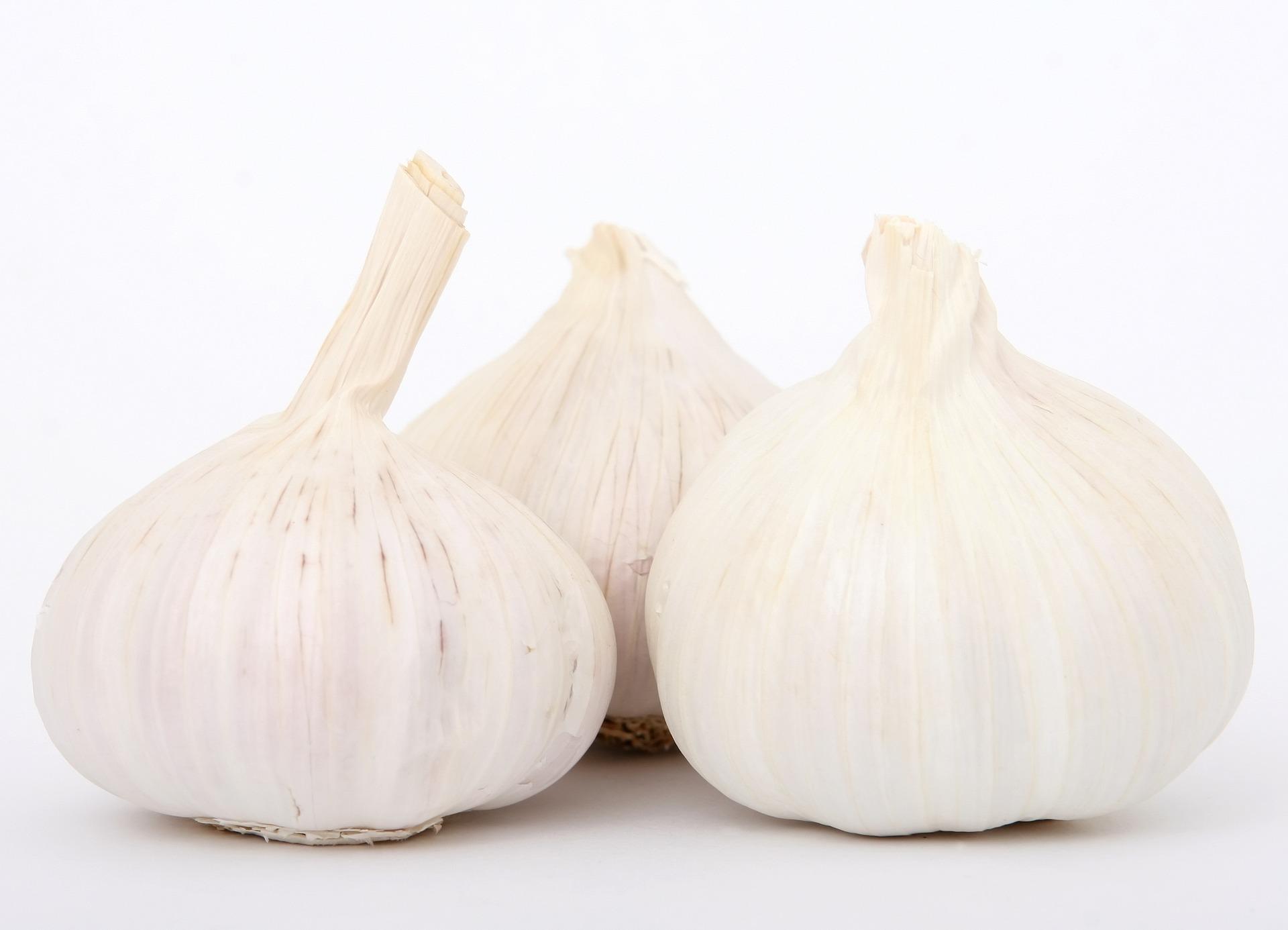 Agri - Garlic 1
