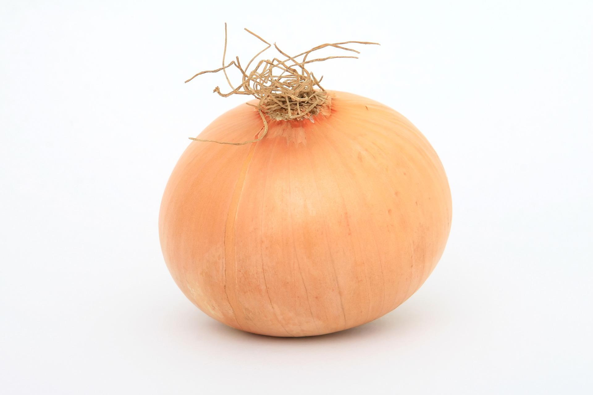 Agri - Onions 1