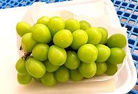 Pilar_Moscato_Agrifoods_8_edited.jpg