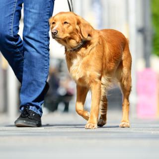 Països amb impostos addicionals per tenir gos