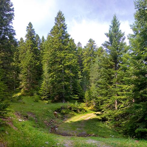 Boscos d'Andorra