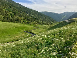 Conoce de cerca la flora y fauna más representativa de Andorra mientras realizas una ruta por los valles de país. Sus animales y elementos naturales te sorprenderán!