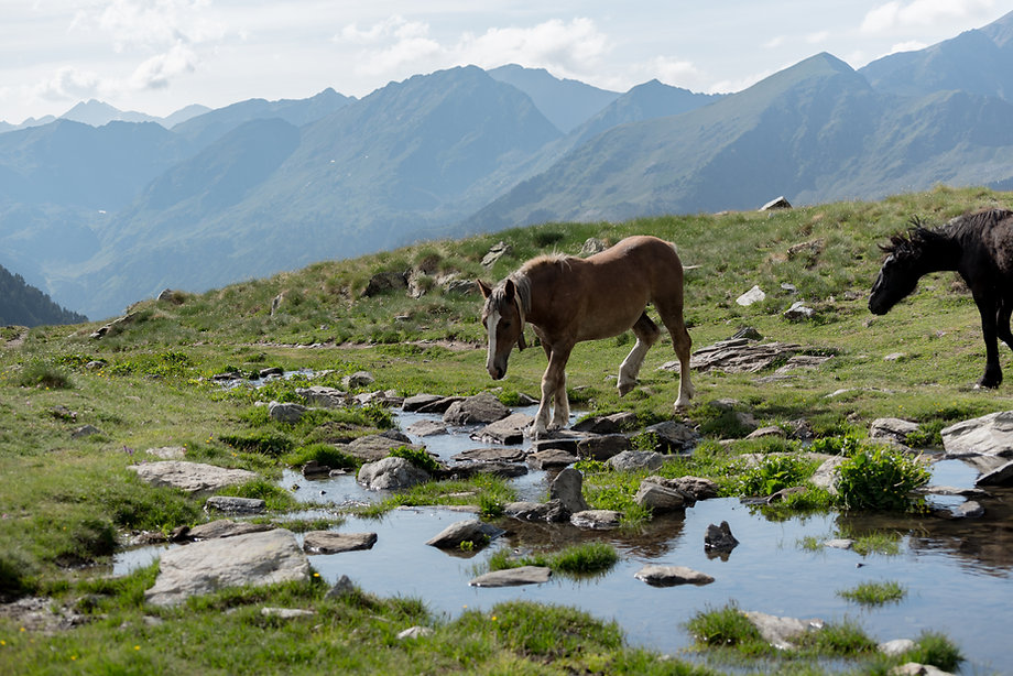 El 90% de la superficie de Andorra integra lagos, bosques, ríos y montañas. Por este motivo, el país presenta un ecosistema muy rico en fauna y flora. Entre las especies de animales más representativas encontrarás laperdizblanca, la marmota, la vaca bruna, el rebeco, el buitre o la trucha de río. En cuanto a la flora y agricultura, puedes fijarte en lagrandalla, que es un símbolo de Andorra, la flor del tabaco, las frambuesas, los arándanos y, por supuesto, elabeto y elabedul.