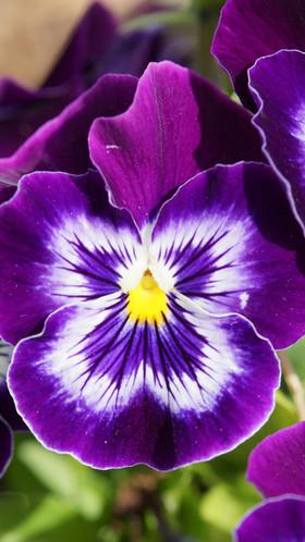 Flors de tardor per omplir de calidesa la llar