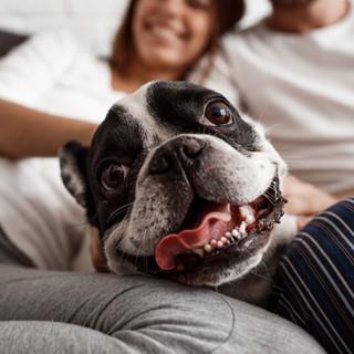 Com aprofitar el temps a casa amb la teva mascota