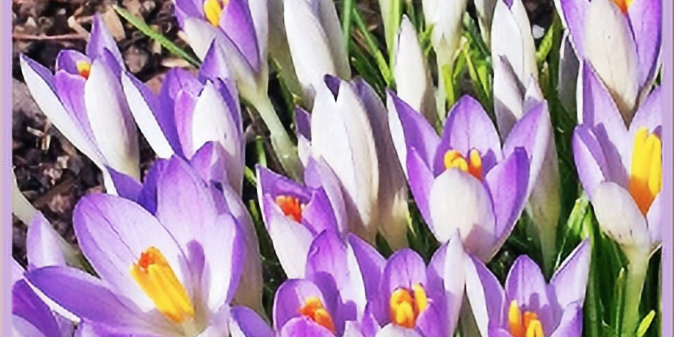 A Gift in the Chaos: Spring Equinox Manifestation Workshop