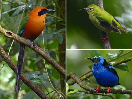 Costa Rica - Birds