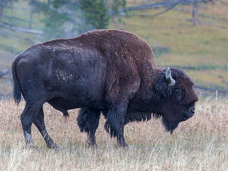 Yellowstone NP, Teil I