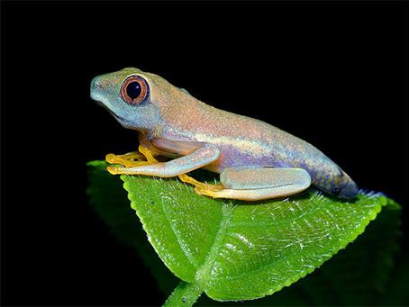 Frog Kindergarten
