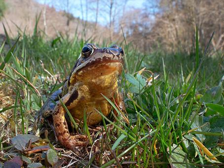 Frühling in Deutschland - Amphibien