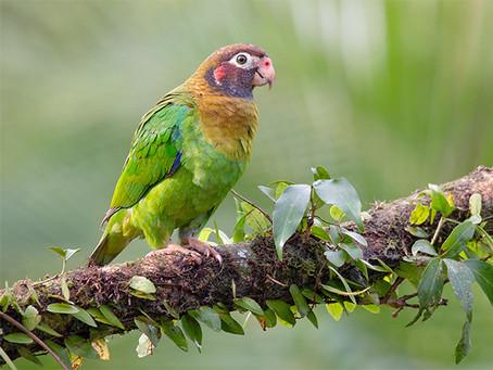 Costa Rica - Vögel III