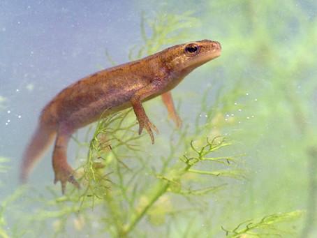 Good newts, everyone!
