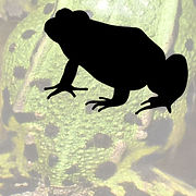 button Amphibians