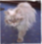 all CATs same_edited_edited.png