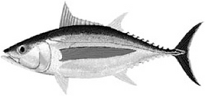 Website Fish.png
