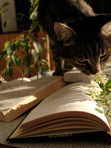 photo-of-cat-standing-on-top-of-a-book-2