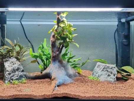 Un aquarium en CM2