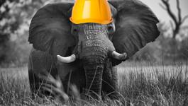 Den om elefanter...