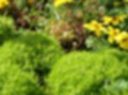 黄色の野生の花