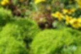 Gelbe wilde Blumen