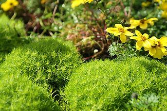 Fleurs sauvages jaune