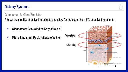 Retinol vs Retinoic Acid 3.png