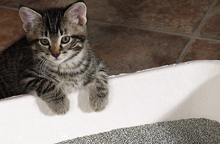 Kitty Litter And a Can of 9 Lives? Nope, Not exactly!
