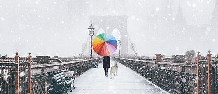 PREMIUM ALUMINUM DIBOND NYC Rainbow Dog