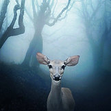 CANVAS Mystic Deer