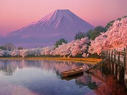 POSTER Japan Cherry Blossom