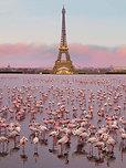 POSTER Flamingos in Paris