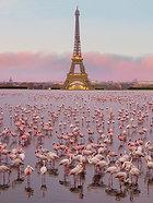 ACRYLIC GLASS ON ALUMINUM BASE Flamingos in Paris