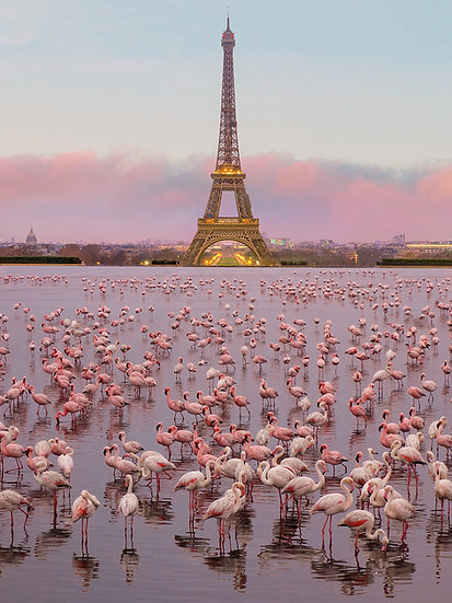 ACRYLIC GLASS ON ALUMINUM BASE Flamingos in Paris