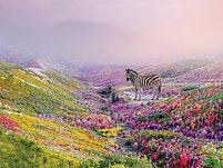 POSTER Flower Zebra