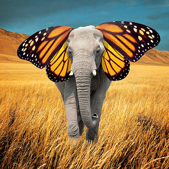 CANVAS Butterphant