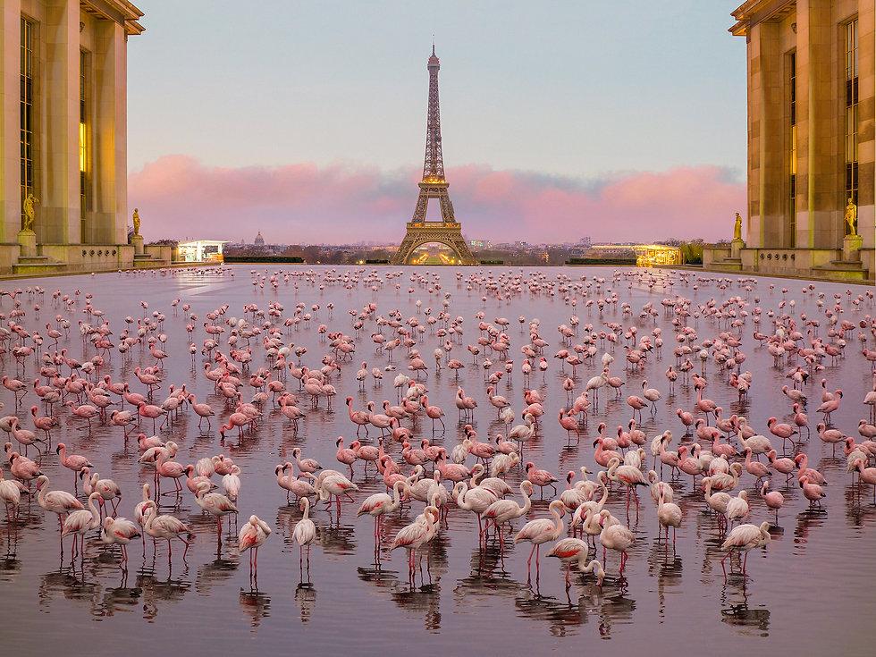 paris_flamingos_header.jpg