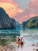 POSTER Halong Bay Lotus Flowers