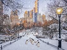 POSTER Central Park Penguins
