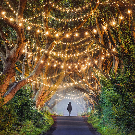 CANVAS Dark Hedges
