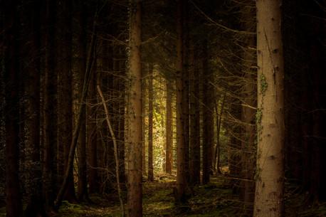 Pine light20190317.jpg