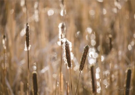 reeds print A4 argb.jpg