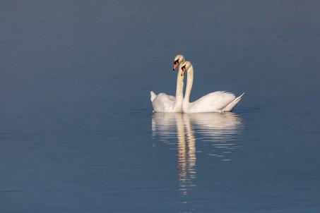 Birds of Middleton Lakes 9920190227.jpg