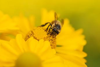 yellow220190912.jpg