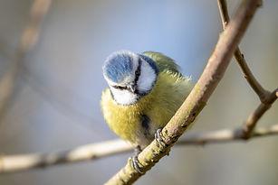 British birds20420190130.jpg