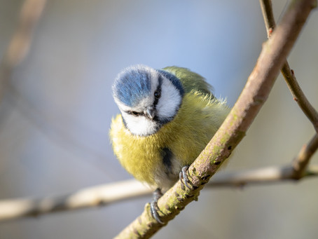 Why not take part in the RSPB Big Garden Birdwatch 2021?