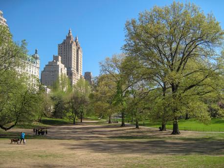 central park scene.jpg